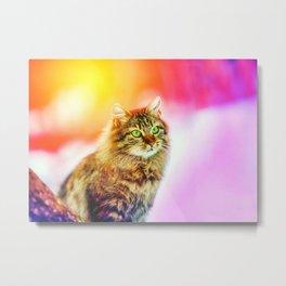 Animals Cat Feline Image K Metal Print