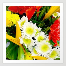 Chrysanthemum/ Mums Art Print