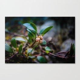 Bearberry Flower Canvas Print