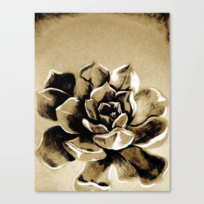 Succulent sepia Canvas Print