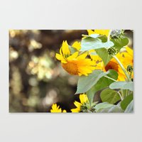 sunflowers Canvas Prints featuring SUNFLOWERS :) by Teresa Chipperfield Studios