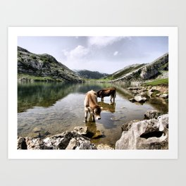Cows in Lakes of Covadonga, Asturias Art Print