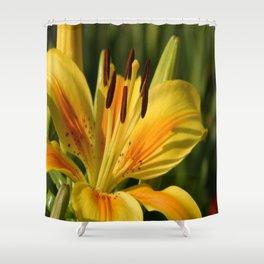 Beautiful Yellow Lily Shower Curtain