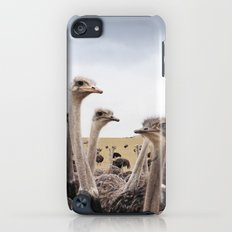Ostriches iPod touch Slim Case