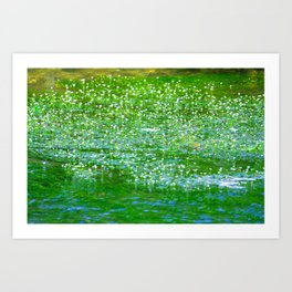Starry flowers on the water Art Print