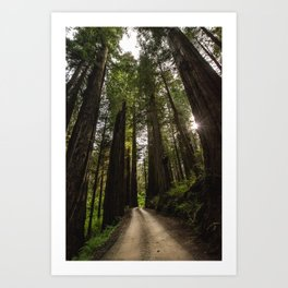 Redwoods Make Me Smile - Nature Photography Art Print