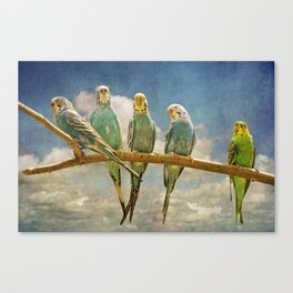 Parakeets perched on a branch againts a cloudy blue sky Canvas Print