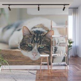 Cat by Nathan Fertig Wall Mural