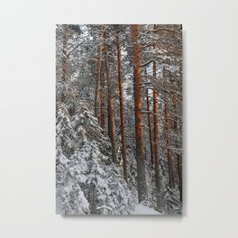 Frosty wildwood by the spring sunlight. Metal Print