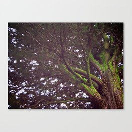 Roots and Wings Canvas Print