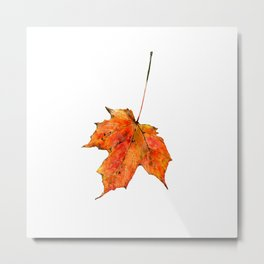 Maple Leaf 1 Metal Print