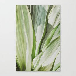 s Canvas Print