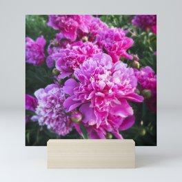 Pink Peonies Tilt Shift with Border Mini Art Print