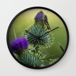 Grasshopper on a Thistle Wall Clock
