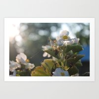 Flower Web Art Print