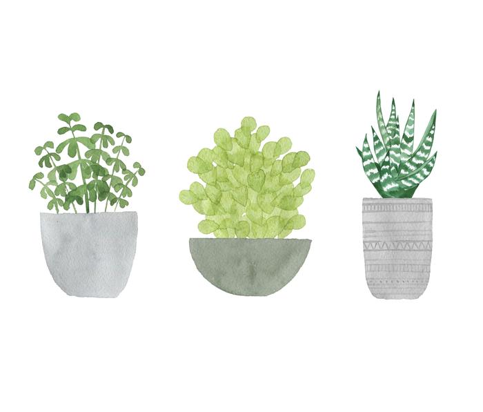 Watercolor Succulent Plants Metal Travel Mug