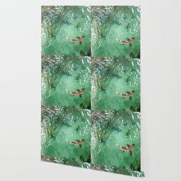 Look at the Shark Wallpaper