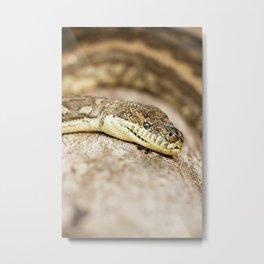Coastal Carpet Python Metal Print