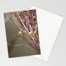 Dry flowers Stationery Cards