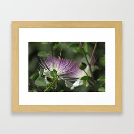 Caper flower Framed Art Print