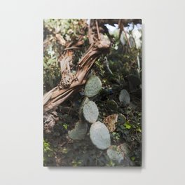 Prickly Pear Mood Metal Print