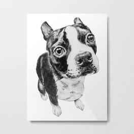 Ollie the Boston Terrier Metal Print