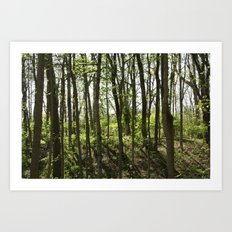 Near the Rope Swing Art Print