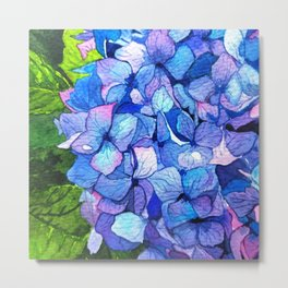 Vibrant Blue Hydrangea Metal Print