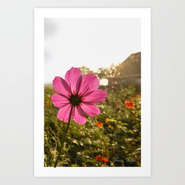 Life's Lessons and a Buttern Churn Art Print