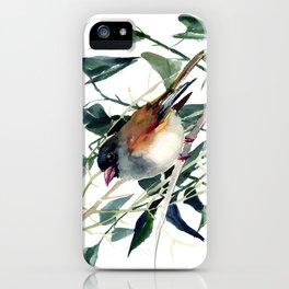 Cute Bird Dark Eyed Junco iPhone Case