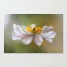 Anemone soft Canvas Print