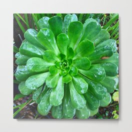 Giant succulent flower Metal Print