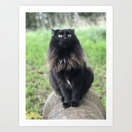 Duchess Surprised Art Print
