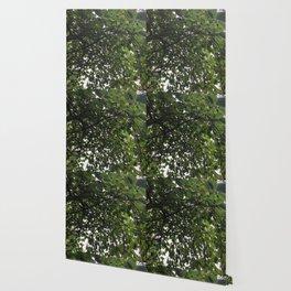 Umbrella Tree Wallpaper