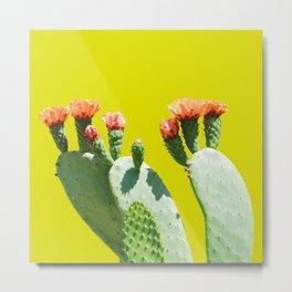Cactus fleuri Metal Print