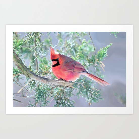 Cold Winter's Day Cardinal Art Print