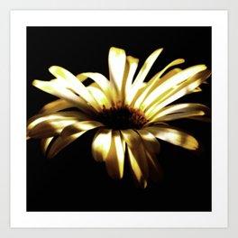 Summer Shadows On Flowers Art Print