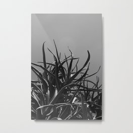 Aloes in Black and White Metal Print
