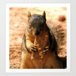Contented Squirrel. © J. Montague. Art Print