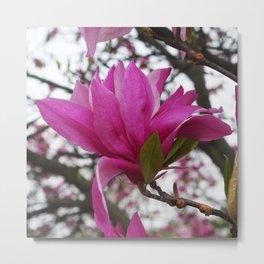 Magnolia sky Metal Print