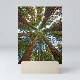 Redwood Forest Canopy Mini Art Print