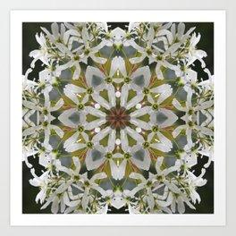 Lacy Serviceberry kaleidoscope - Amelanchier 0033 k5 Art Print