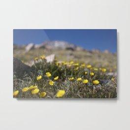 Alpine Avens Metal Print