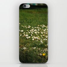 Dasies iPhone & iPod Skin