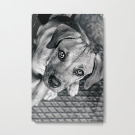 Dogg Metal Print