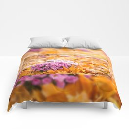 Flowering clump of pink Chrysanths Comforters