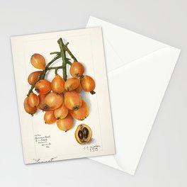 Loquats (Eriobotrya Japonica) (1908) by Amanda Almira Newton Stationery Cards