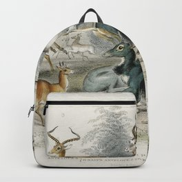 Addax Koodoo Pallah Kevel Gazelle Springbock Salts Antelope Takhaitze and Nyl Ghau from A history of Backpack