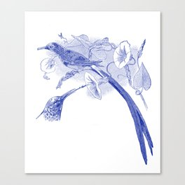 Vintage Blue and White Drawing of African Sunbirds Canvas Print