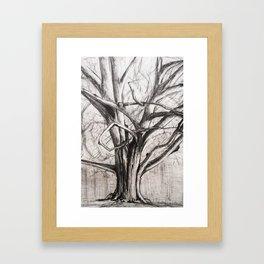 Tree in the Park Framed Art Print